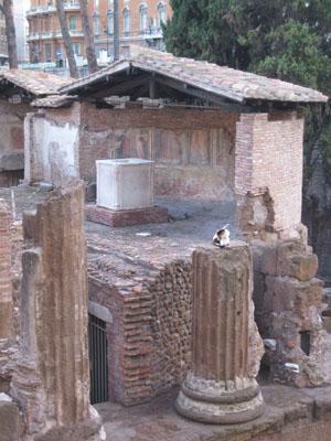 Cats at Largo Argentina