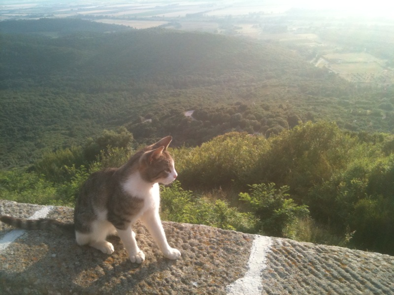 Such a cute kitten! She/he loves the view in Sticciano