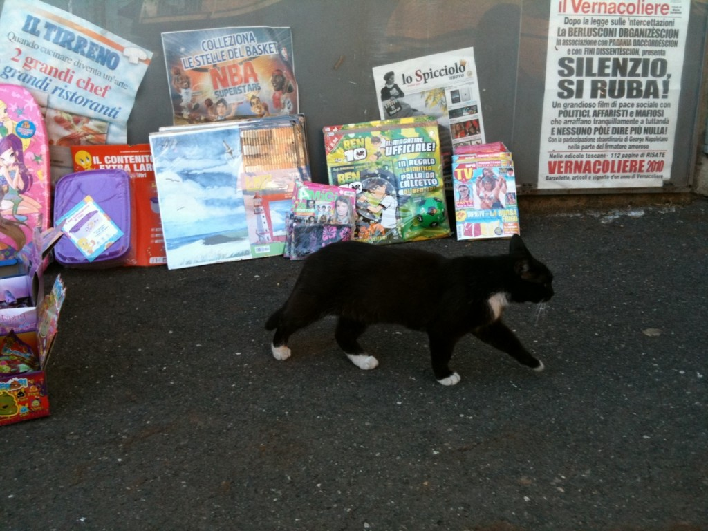 newspapers in italy with cat
