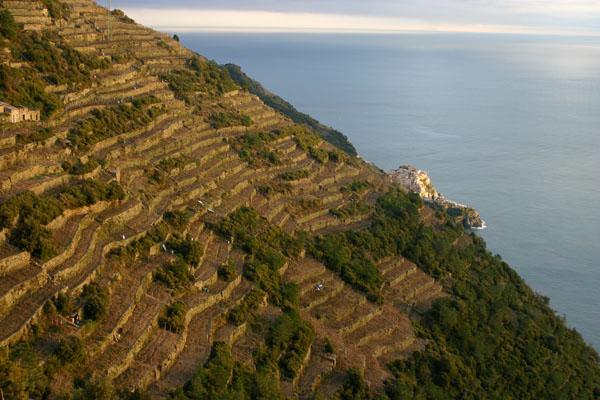 Terraced vineyards in the Cinque Terre
