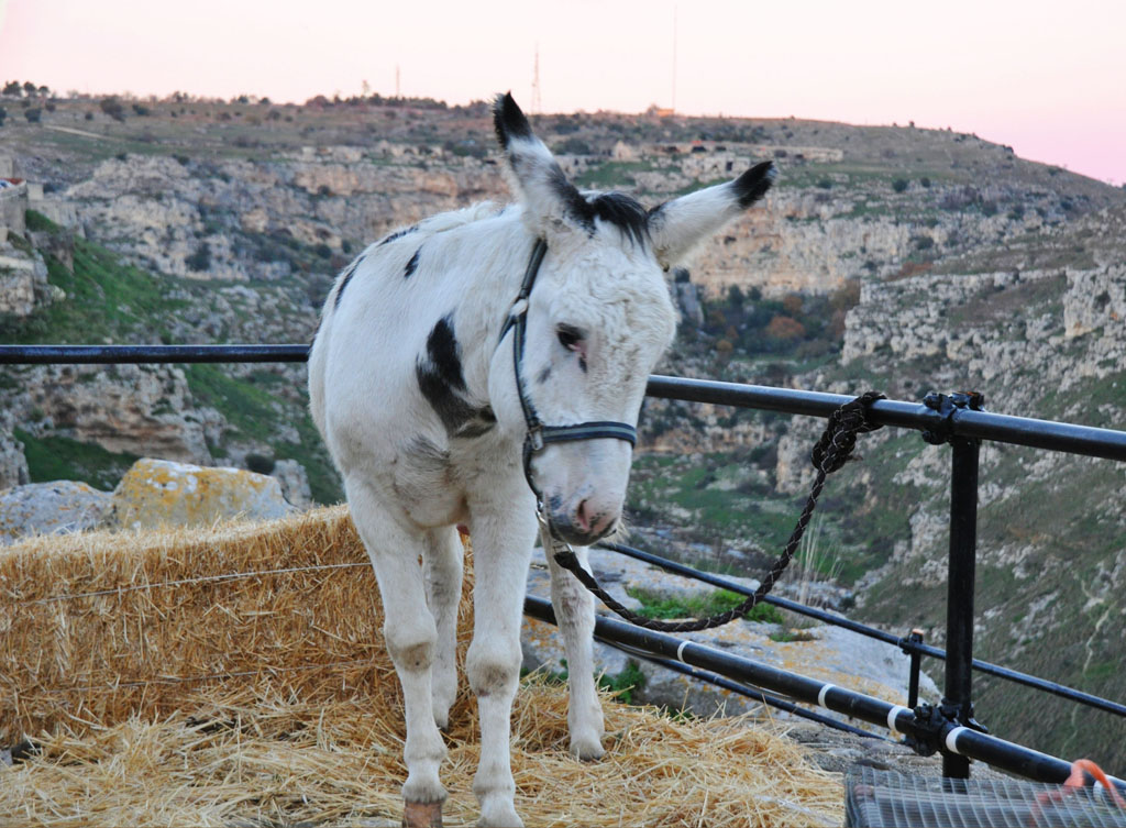 A donkey in Matera :)