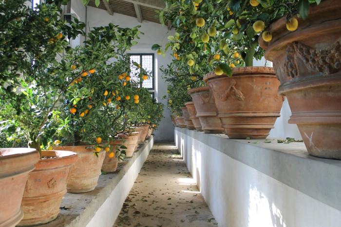 lemons-limonaia-boboli