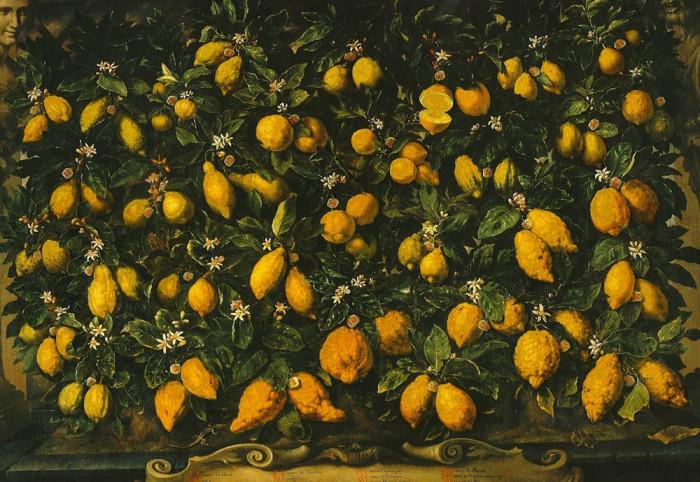 Bartolomeo Bimbi, Cosimo III's lemon collection