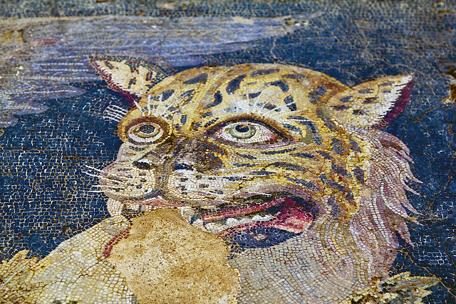 Tiger head - floor mosaic detail, House of Dionysos. Photo: Flickr user @Chris Beckett