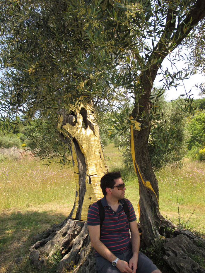 Tommaso and the gilded olive tree