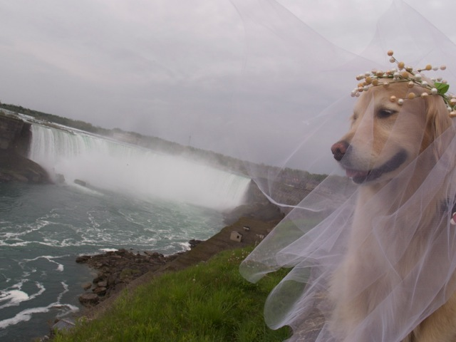 Niagara Falls, Pastrami as a bride