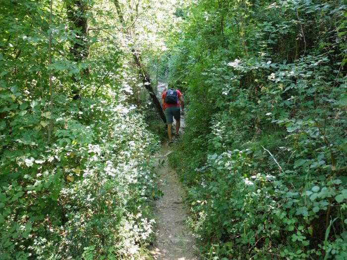 A narrow path