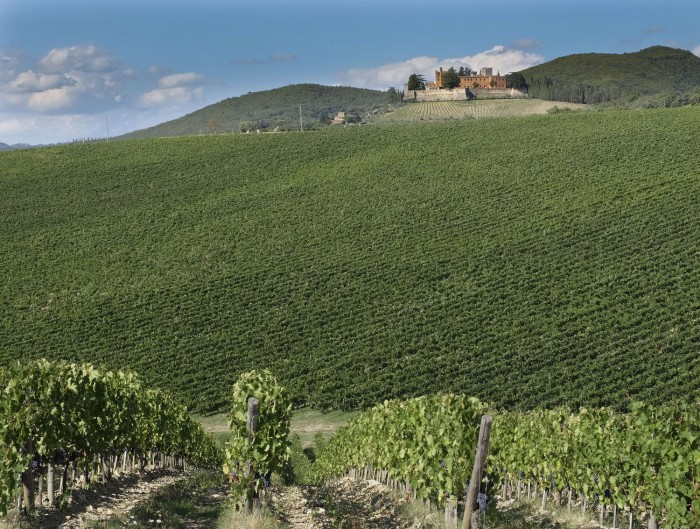 The very regular vineyards overlooked by the castle