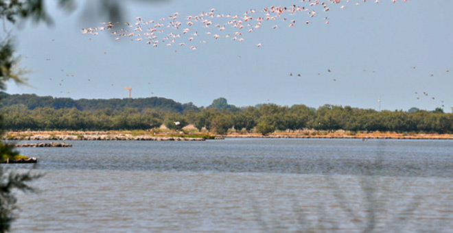 Pink Flamingos over Bibione Valgrande (Photo credit bibione.com)