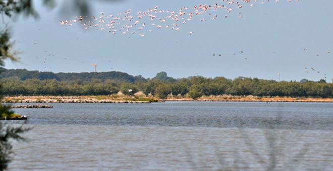 Pink Flamingos over Bibione Valgrande (Photo credit bibione.com)