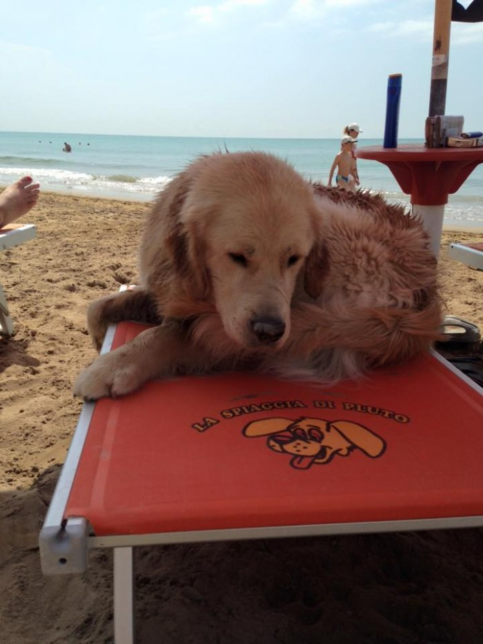 Isn't this the cutest dog on doggie sun bed? From the Spiaggia di Pluto Facebook page.
