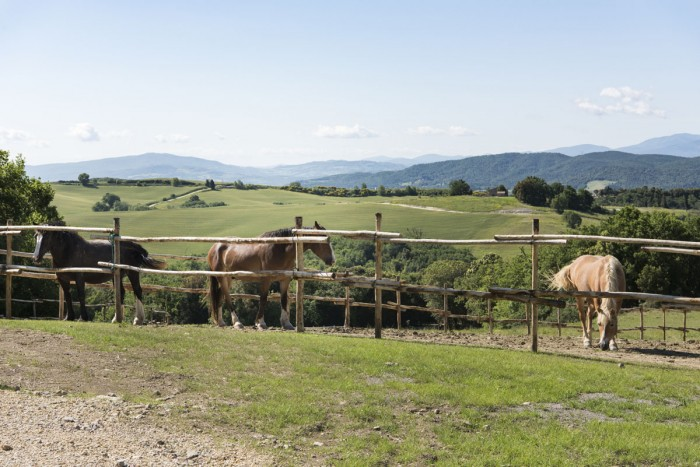 Borgo Pignano in Tuscany's horses