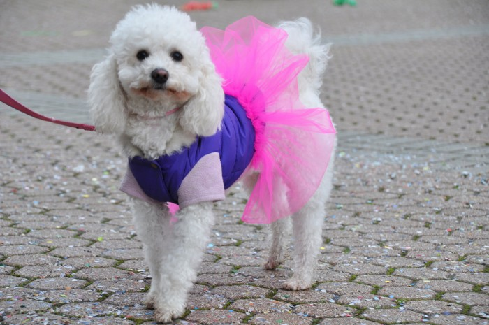 Even the dogs are dressed up (she's totally posing for me, too!)