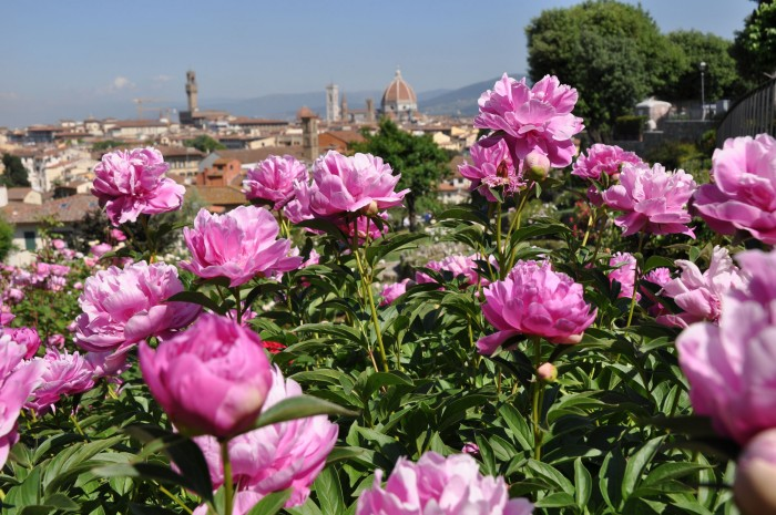 Florence's Rose Garden frames the landscape (photo taken in 2011, there has been a crane in this view ever since)
