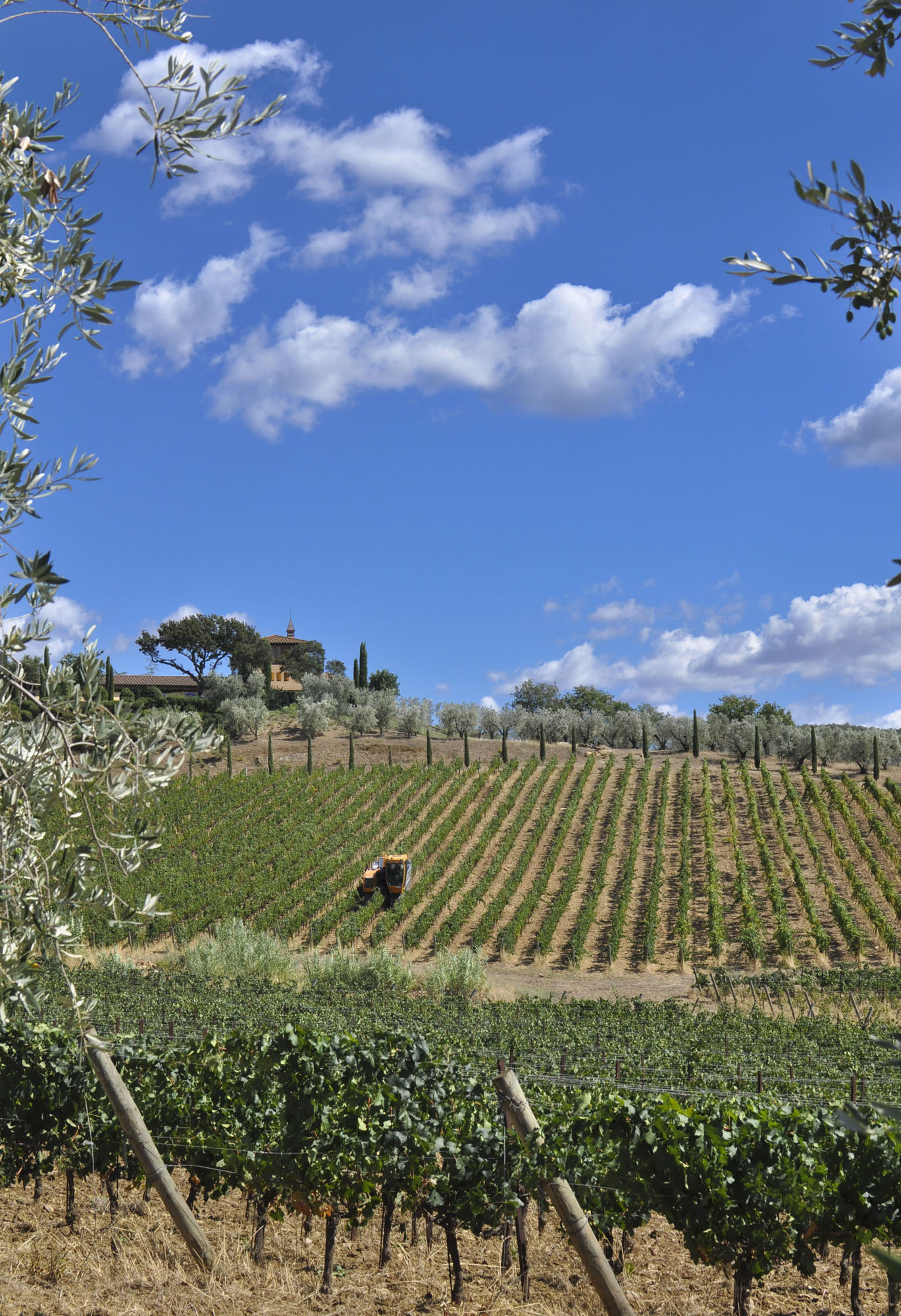 how to visit wineries in tuscany