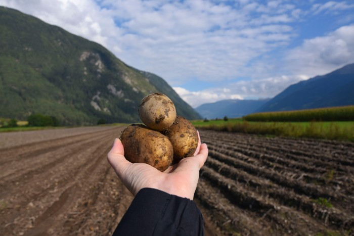 I went to see where potatoes come from.