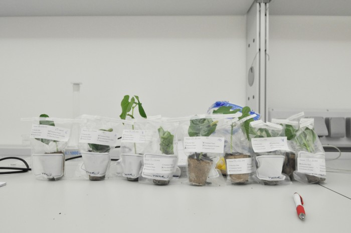 Plants labeled for experimentation
