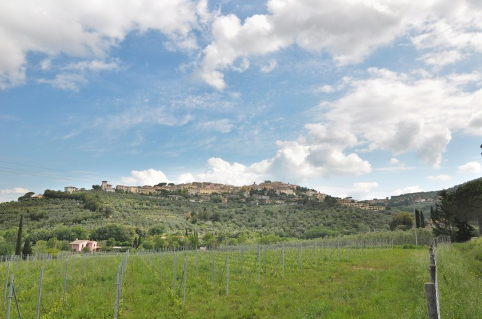 A new vine planted with a view of Castagneto Carducci above