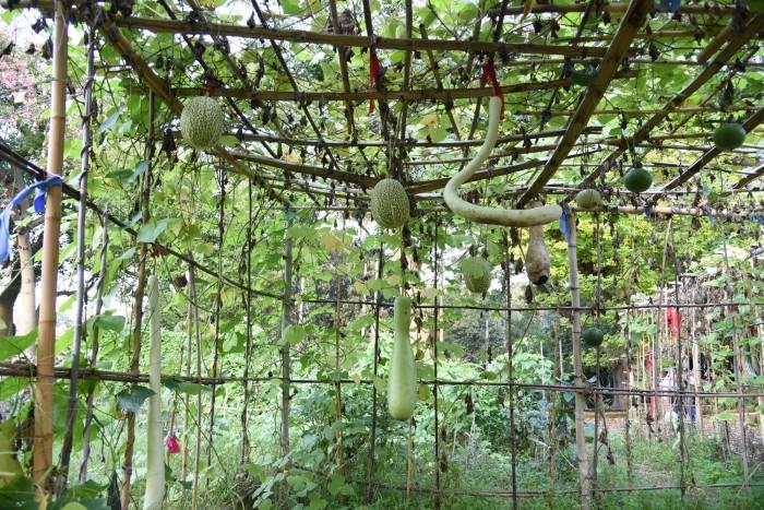 Seed hut | ph. Marco Badiani