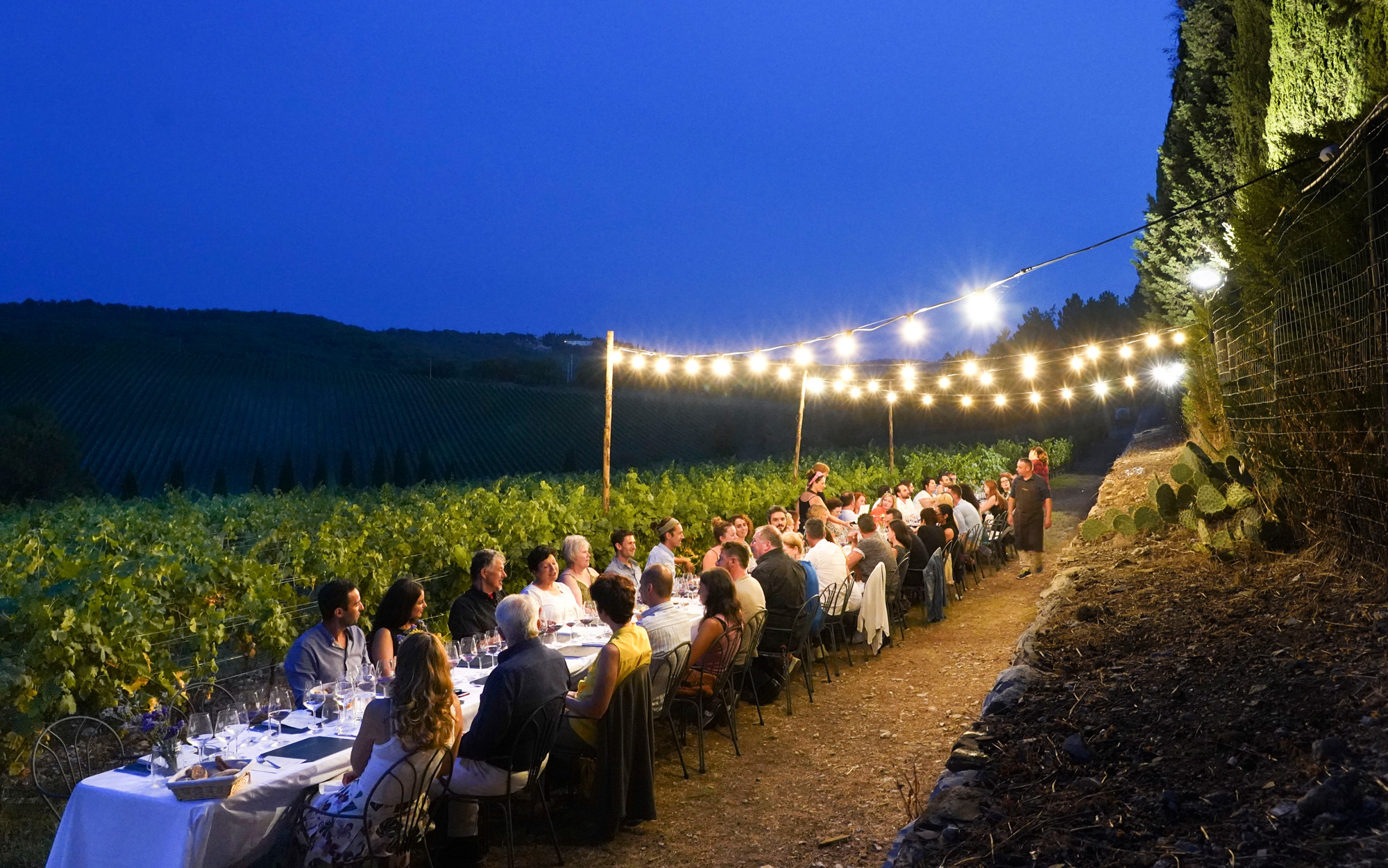 Dinner in a vineyard at the blue hour