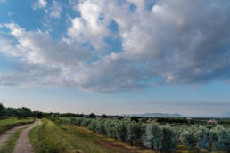 podere l'agave field outdoors